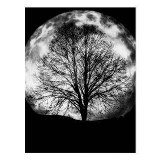 Tree Silhouette in Front of a Full Moon Postcard