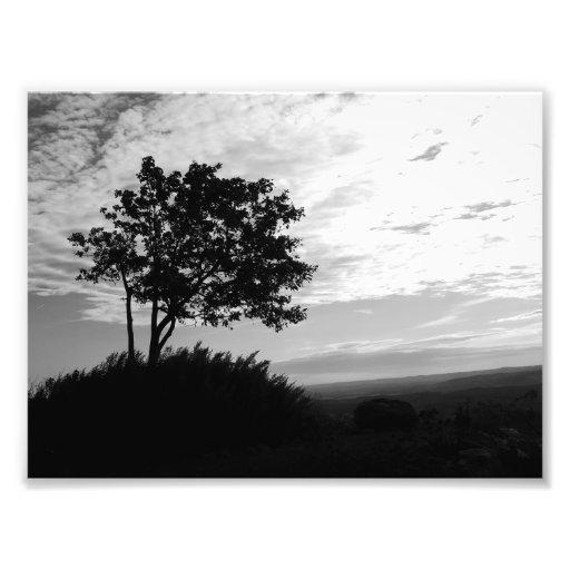 Tree Silhouette Monochrome Photo Print