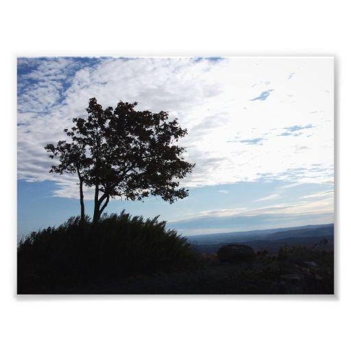 Tree Silhouette Photo Art