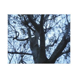 Tree Silhouette Photogarph Canvas Print