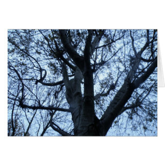Tree Silhouette Photograph Greeting Card