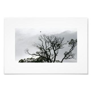 Tree Silhouette Powerscourt Gardens Photo Print