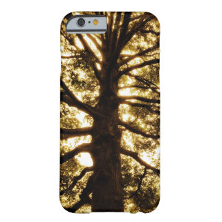 Tree Silhouette Sepia iPhone 6 Case