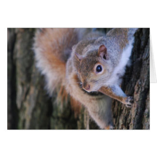 Tree Squirrel  Greeting Card