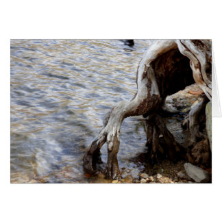 Tree Stump in Lake, Mammoth Lakes CA, Blank Inside Card