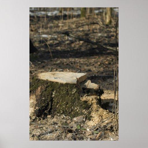 Tree stump print