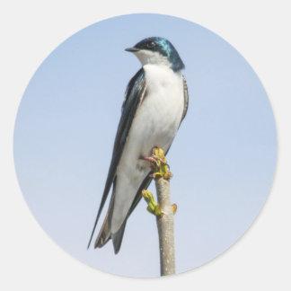 Tree Swallow Classic Round Sticker