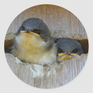Tree Swallows Looking Out at the Big Wide World Round Sticker