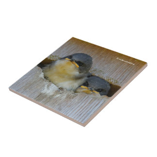 Tree Swallows Looking Out at the Big Wide World Small Square Tile