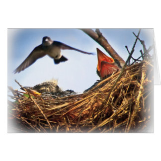 Tree Swallow's Nest Feeding Time Greeting Card
