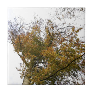 TREE TOP IN AUTUMN SMALL SQUARE TILE