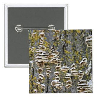 Tree Trunk with Lichen Pins