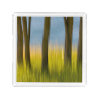 Tree Trunks and Grass | San Juan Islands, WA Acrylic Tray