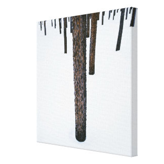 Tree Trunks in Snow Stretched Canvas Print