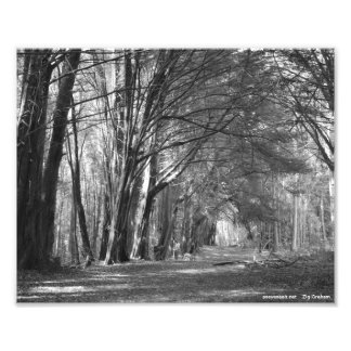Tree Tunnel Photo Print