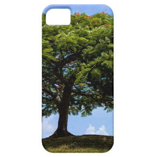 tree was true iPhone 5 covers