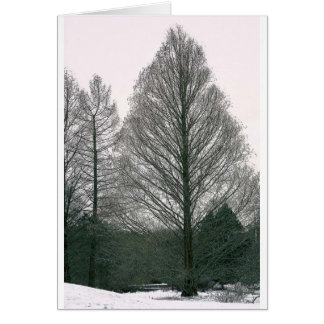 Tree - Wave Hill NYC Card