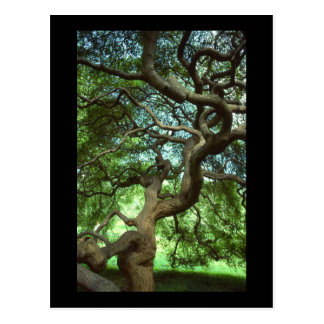 tree with twisted branches postcard