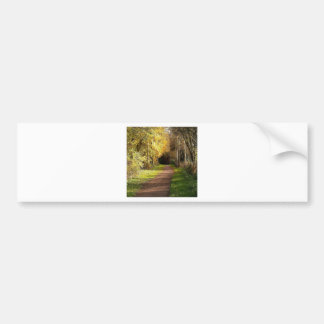 Tree Woods In The Way Bumper Stickers