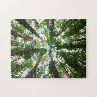 Trees Above Me Puzzle
