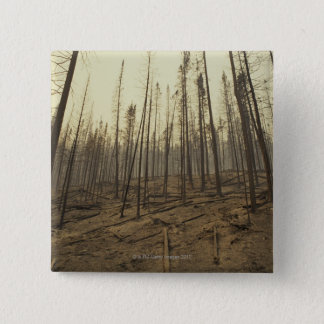 Trees after forest fire 15 cm square badge
