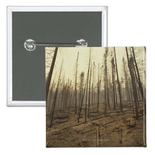 Trees after forest fire pinback buttons