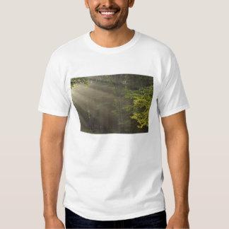 Trees alongside 7 Lakes Drive, Harriman, NY Shirts