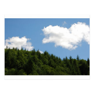 Trees and blue sky post card