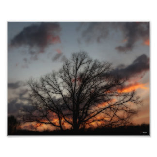 Trees and Clouds At Sunset Fine Art Photo