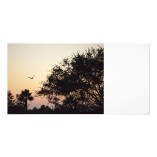 trees and flying bird against florida sunset photo greeting card