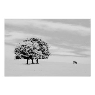 trees and horse poster