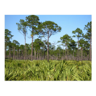 Trees and Saw Palmettos Postcard
