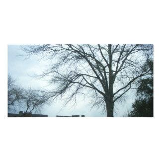Trees And Sky (PhotoCard) Custom Photo Card