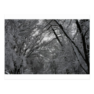 """""""trees and snow"""" by Coressel Productions Postcard"""