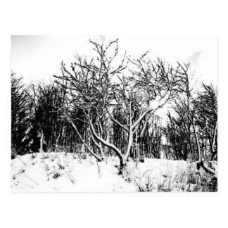Trees and Snow Scene, Black and White Postcard
