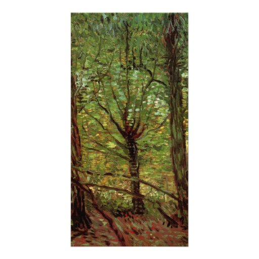 Trees and Undergrowth by Vincent van Gogh Photo Greeting Card