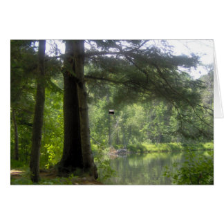 trees and water reflections greeting card