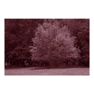 Trees, Apple Valley Poster
