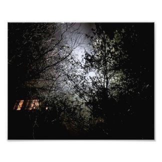 Trees at night photo print