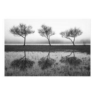 Trees by the lake photo print