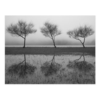 Trees by the lake postcard