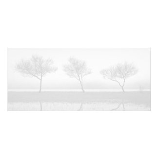 Trees by the lake custom rack cards