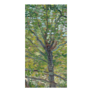 Trees by Vincent Van Gogh Photo Greeting Card