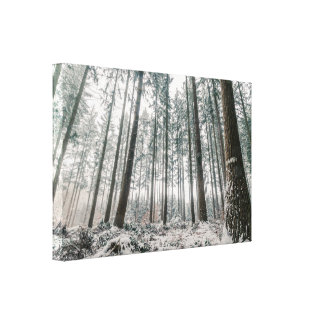 Trees covered with snow in the forest canvas print