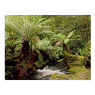 Trees environment Tasmania Australia Photography Postcard