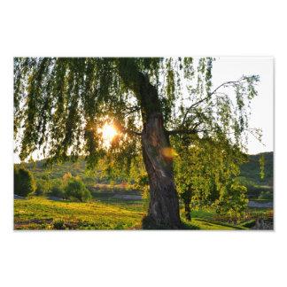 Tree's eye photographic print