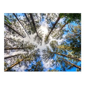 Trees from below postcard