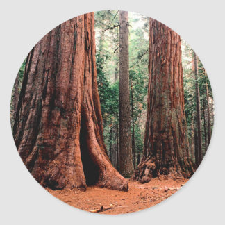 Trees Giants Calaveras Round Sticker