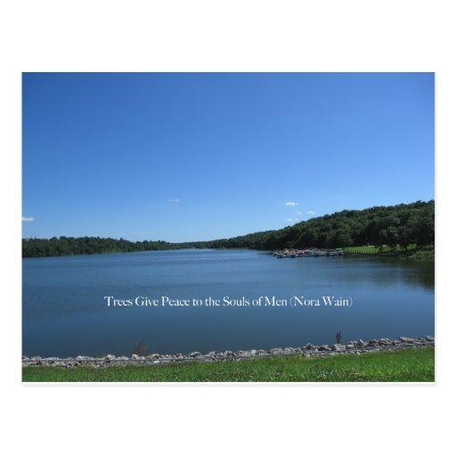 Trees Give Peace Postcard