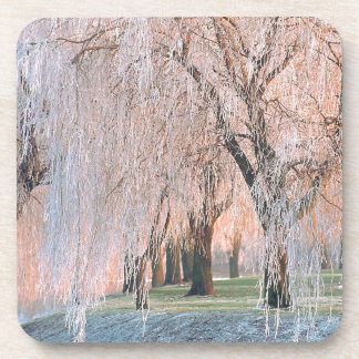 Trees Ice Covered Willow Coasters